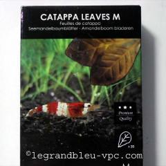FEUILLES DE BADAMIER Terminalia catappa